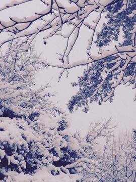 Snow news update